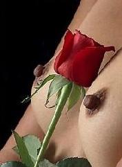 pecho&rosa.jpg