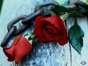 rosasycadenas.jpg